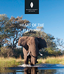 Heart of the Elephant